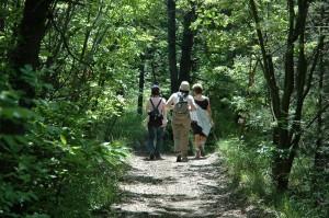 Domenica 15 maggio : il Bosco dei Faggi